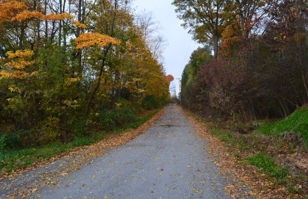 A quiet  country road  begged for a walker's footsteps early this morning. (Photo by Joe Barkovich)