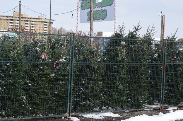 Christmas trees spotted in a parking lot brought back memories. (Photo by Joe Barkovich)