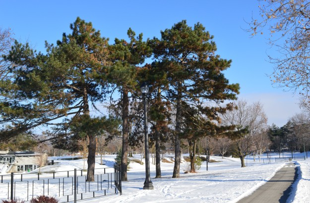 Chippawa Park after a light dusting of snow, November 2014.