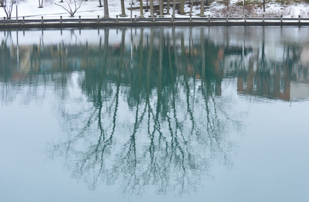 Tree reflection in Welland Recreational Waterway near downtown Welland, December 2014.