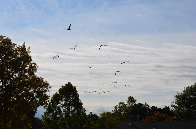 High fliers over Chippawa Park, October 2014. (All photos by Joe Barkovich)