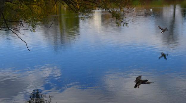 Canal flyover, near Merritt Park, October 2014.