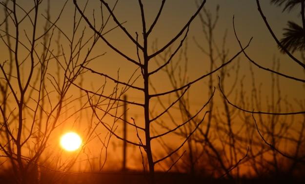 Palm Sunday sunrise through thicket of the Niagara College berm, 7:16 a.m. (Photo by Joe Barkovich.)