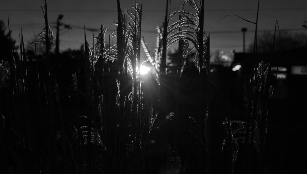 Watching the sun come up from behind tall and elegant ornamental grass. I think the scene is given an aura, of sorts, in this black and white viewing experience. But maybe I'm wrong.(Photo by Joe Barkovich)