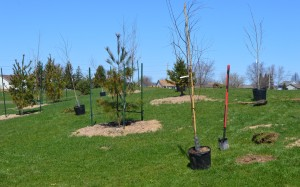 Just some of the trees planted Saturday.