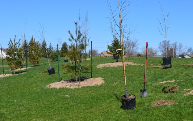 Just some of the trees planted today, on a site near the Safety Village.