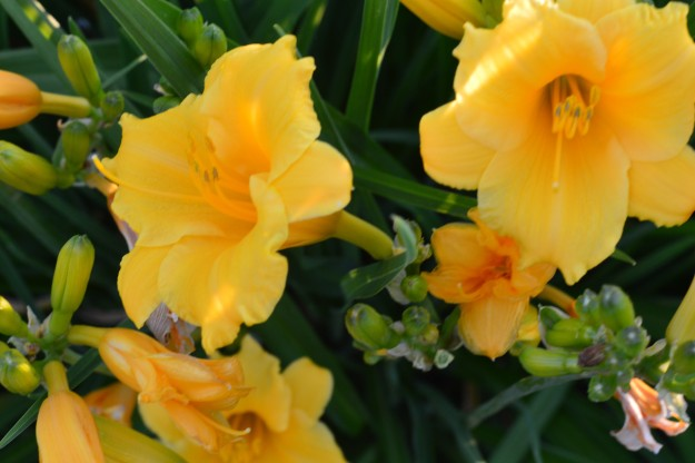 A splash  of cheery yellow to start off the work week. Happy Monday! (Photo by Joe Barkovich)