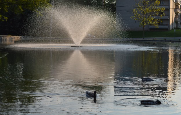 CITY SHORTS ART - Three ducks enjoy a swim in the Chippawa Park pond. Two seem to be underwater adventurers. (Photo by Joe Barkovich. City Shorts Art is a recurring feature on the blog.)