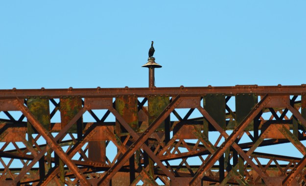 A cormorant has a bird's eye view of the surroundings from atop a perch on the old railway swing bridge in Welland. (Photo by Joe Barkovich)