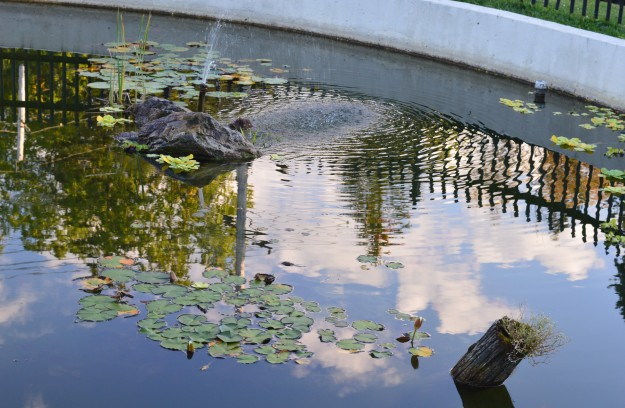 CITY SHORTS ART: The goldfish pond is a popular attraction, not to mention a pretty feature, in Welland's Chippawa Park. (Photo by Joe Barkovich)