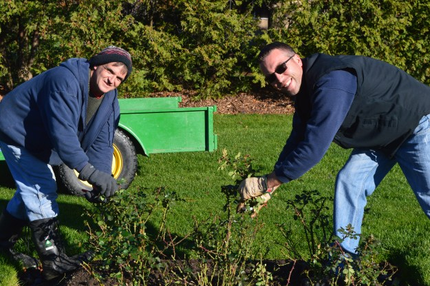 Frank Reddon, left, and Dave Steven started autumn pruning of Chippawa Park roses on Monday. (Photos by Joe Barkovich)