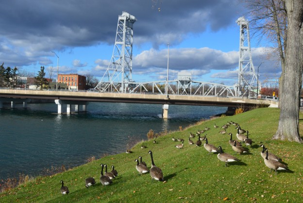 Canada geese on a Sunday afternoon stroll in Welland's Merritt Park, the iconic Main Street Bridge in the background. (Photo by Joe Barkovich)