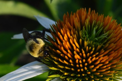 I love flowers. I also love bees. Here are a few shots featuring both, including two from earlier this spring and others archived from the past few years. (Photos by Joe Barkovich)