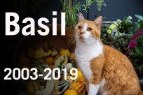 Basil-In-Memoriam-810x540-810x540