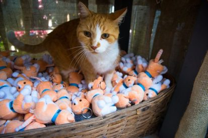 Basil the NC Greenhouse cat poses with keychains in his likeness which are now for sale to support a bursary in his name.