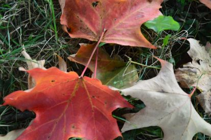 At this time of year the ground becomes a canvas for beautiful displays of colour. (Photos by Joe Barkovich)